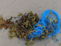 Seaweed and blue rope stock photo