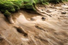 Seaweed coast Stock Image