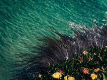 Seaweed and coastal flowers stock image