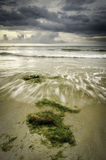 Seaweed at the coastline with wave lapping on the shore Royalty Free Stock Photography