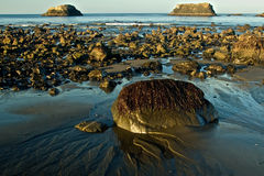 Seaweed Covered Boulder on Oregon Coast. Seaweed covered boulder half buried in sand. Photographed on the Oregon coast near Port Orford Stock Photo