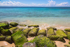 Seaweed covered rocks on Atlantic coast at Dominican Republic royalty free stock images