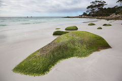 Seaweed covered rocks, Tasmania Stock Image