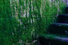 Seaweed covered stairs Royalty Free Stock Photography