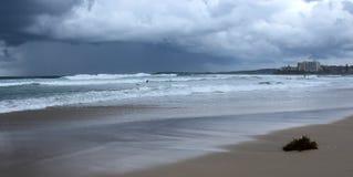 Seaweed on Cronulla beach Royalty Free Stock Photo