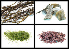 Seaweed Stock Photos