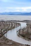 Seaweed farm Stock Images