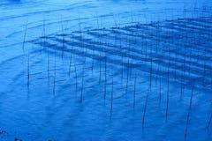 Seaweed farm royalty free stock photos