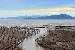 Seaweed farm stock image