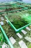 Seaweed farm Stock Photo