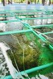 Seaweed farm Royalty Free Stock Photography