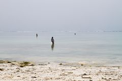Seaweed farmers in the blue water off the white beach in Zanzibar Royalty Free Stock Photos