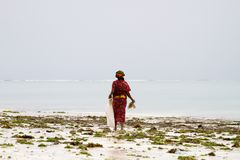 Seaweed farmers in the blue water off the white beach in Zanzibar Royalty Free Stock Photo