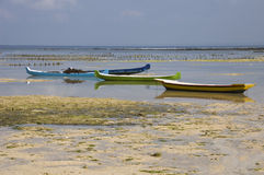 Seaweed farming on the island of Nusa Lembogan Stock Photography