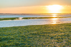 Seaweed field on Waddensea wetlands, Netherlands Royalty Free Stock Photography