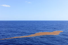 Seaweed floating mid Atlantic. A great blanket of seaweed floating on the surface in mid Atlantic ocean stock photo