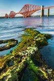 Seaweed and Forth Road Bridge in Scotland stock image