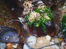 Seaweed, fresh water, marine organisms and sand royalty free stock photography