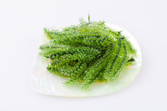 Seaweed , Healthy sea food in the dish from mother of pearl. Stock Photo