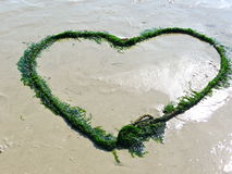 Seaweed heart on the beach Royalty Free Stock Photography