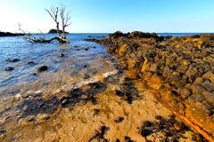 Seaweed in indian ocean madagascar Stock Images