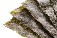 Seaweed Isolated Stock Photo