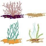 Seaweed isolated on white background Stock Image