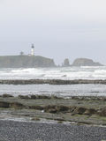 Seaweed and kelp on beach rocks. At low tide, with lighthouse in foggy  background,  Oregon coast Stock Images