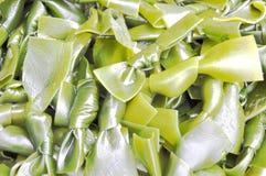 Seaweed knots Royalty Free Stock Photography