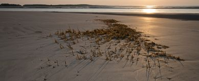 Seaweed left behind during low tide on Seabrook Island's North Beach area Royalty Free Stock Photo