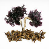Seaweed and mushrooms Royalty Free Stock Images