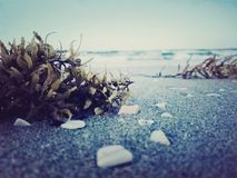 Seaweed and Ocean Royalty Free Stock Images