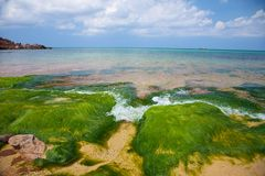Seaweed and ocean horizon Royalty Free Stock Photography