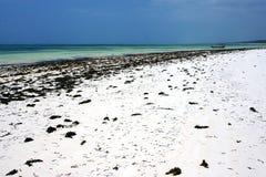 Seaweed och fartyg i tanzania Fotografering för Bildbyråer