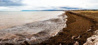 Seaweed Panorama of the Gaspe Peninsula Royalty Free Stock Photos