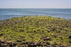 Seaweed in Paracas, Peru