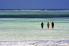 Seaweed and people in zanzibar Royalty Free Stock Images