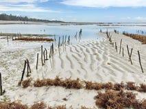 Seaweed plantation. Plantation farmed algae in the Indian Ocean. Zanzibar. production. business Stock Photo