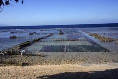 Seaweed plantations, Nusa Penida, Indonesia Royalty Free Stock Photo