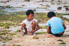 Seaweed Playground. Lembongan, Bali, Indonesia - May 12, 2010: Balinese children playing near a patch of cultivated seaweed during low tide Royalty Free Stock Images