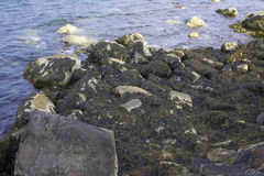 Seaweed and Rocks. Seaweed clinging to Rocks bye the Shore Stock Photo