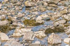 Seaweed on Rocks Stock Image