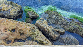 Seaweed and rocks at low tide Royalty Free Stock Photography