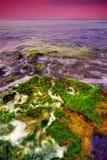 Seaweed on rocks in sea stock image
