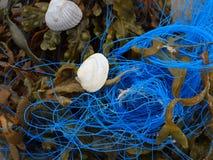 Seaweed, rope and shells royalty free stock photos