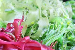Seaweed Salad. Green and purple seaweeds royalty free stock images