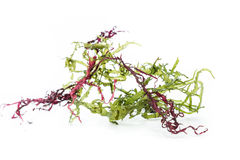 Seaweed salad mix Stock Photos