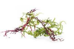 Seaweed salad mix Stock Photos