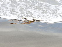 Seaweed in the Sand Royalty Free Stock Photo