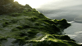 Seaweed on the sand. Stock Photography